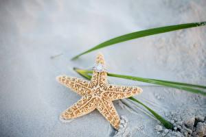 Фото Морские звезды Украшения Вблизи Кольца Песке