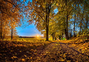 Фото Времена года Осенние Дороги Деревья Листва Солнце Природа