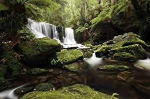 Фотография Водопады Леса Камни Мох Природа