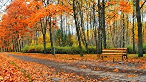 Фотография Парк Осень Дороги Дерева Скамейка Природа