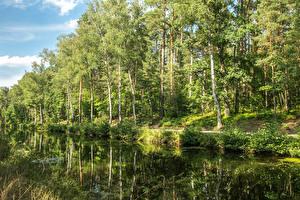 Картинки Германия Реки Леса Лето Нюрнберг Деревья Природа