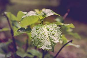 Обои Вблизи Листья Капельки Зеленый Природа
