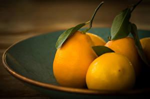 Фотография Лимоны Фрукты Листва Еда