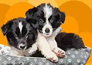 Обои Векторная графика Собаки Рисованные Щенок Двое Бордер-колли Животные