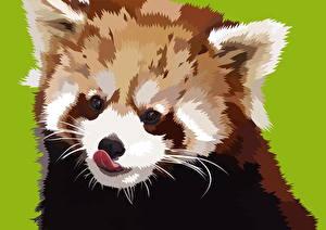 Фотографии Векторная графика Малая панда Рисованные