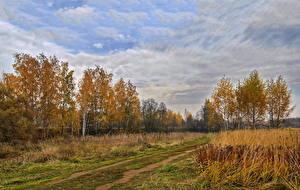 Обои Осень Россия Березы Природа фото