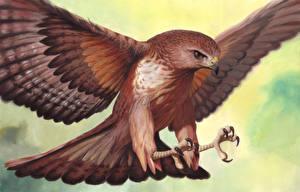 Картинки Птица Ястреб Рисованные