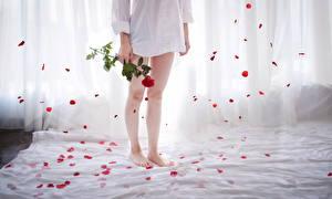 Фотографии Роза Ног Лепестки молодая женщина Цветы