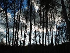 Фотографии Деревьев Силуэты Природа
