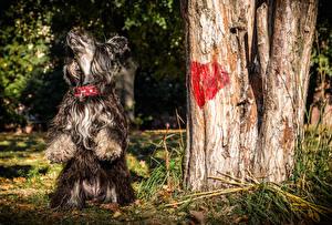 Картинки Собаки Китайская хохлатая Сердечко 1ZOOM Животные