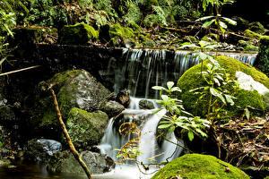 Фотография Португалия Водопады Камни Мох Madeira Природа