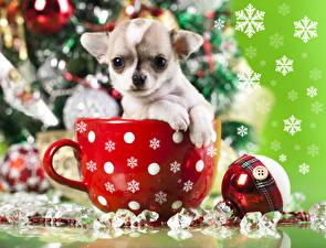 Фотографии Новый год Собаки Щенок Чихуахуа Кружке Животные