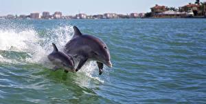 Фотографии Дельфины Воде Брызги Двое Плывет животное