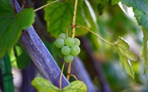 Фото Виноград Вблизи Продукты питания