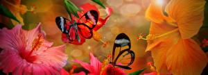 Фото Насекомые Бабочки Гибискусы Животные