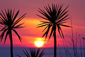 Фото Рассветы и закаты Пальмы Силуэт Солнце Природа