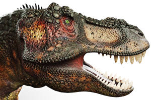 Картинки Древние животные Динозавры Тираннозавр рекс Зубы Голова 3D_Графика