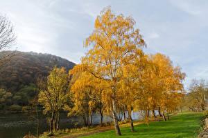 Фото Германия Реки Осень Эдигер-Эллер Деревья Природа