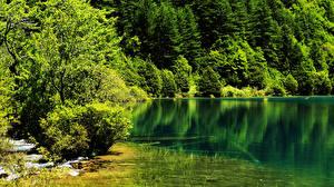 Обои Китай Парки Лето Озеро Леса Цзючжайгоу парк Природа фото