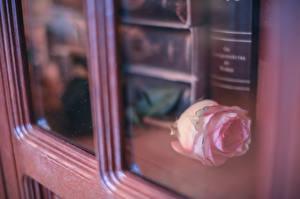 Фото Розы Розовый Стекло Цветы