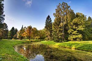 Обои Россия Санкт-Петербург Парки Осень Пруд Деревья Трава Pavlovsk Природа фото