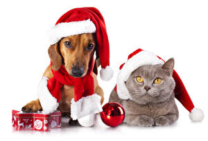 Обои Праздники Рождество Собаки Коты Такса Шапки Шар Двое Животные
