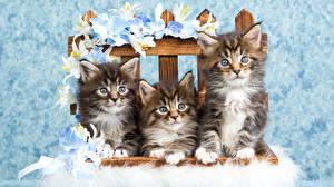 Фото Кот Лилии Котята Три Скамья Животные