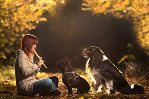 Обои Собаки Французский бульдог Бордер-колли Бульдог Шатенка Свитер Девушки Животные фото