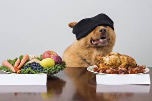 Фотографии Собаки Курица запеченная Фрукты Животные