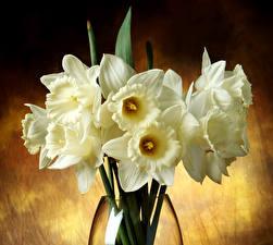 Обои Букет Нарциссы Белый цветок