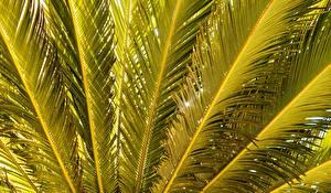 Обои Пальмы Природа