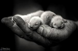 Фотографии Детеныши Крупным планом Руки животное