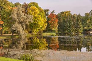 Фото Россия Санкт-Петербург Парки Осень Озеро Деревья Pavlovsk Природа