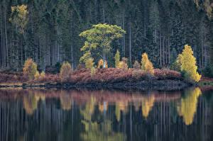 Фотографии Озеро Леса Осень Природа