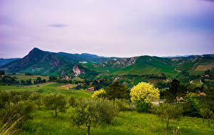 Фотографии Италия Пейзаж Горы Поля Деревья Brisighella Природа