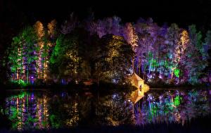 Фото Парки Леса Деревья Ночные Природа