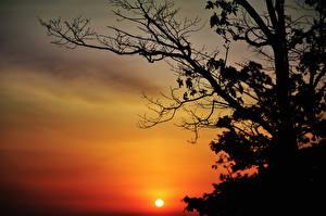 Фото Рассветы и закаты Ветвь Солнце Силуэт Деревья Природа