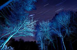 Фото Леса Звезды Ночные Деревья Ветки Природа