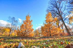 Обои Осень Небо Деревья Трава Природа фото