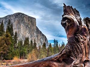 Обои Штаты Парки Леса Йосемити Ствол дерева Скала Природа