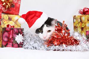 Фото Кошки Праздники Новый год Шапки Подарки