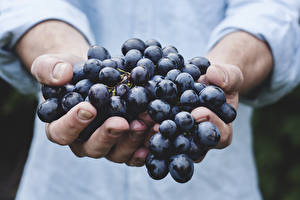 Картинка Виноград Крупным планом Рука Продукты питания