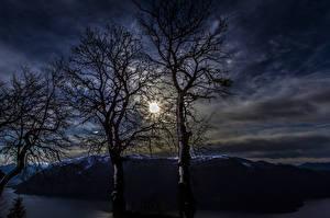 Фотография Ночь Деревья Ветвь Природа