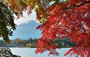 Картинка Япония Осенние Озеро Горы Фудзияма Вулканы Ветка Природа