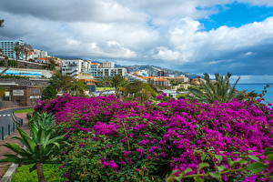 Картинка Португалия Здания Бугенвиллия Облако Funchal Madeira Island Города