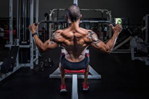 Картинки Бодибилдинг Мужчины Тату Спина Мышцы Тренировка