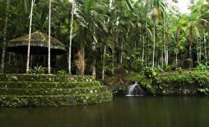 Картинки Бразилия Тропики Леса Водопады Пальмы Paraty Rio de Janeiro Природа