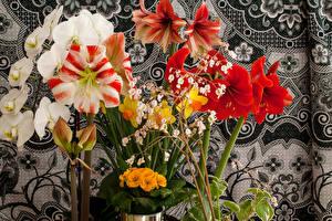 Фото Орхидеи Амариллис Бегония Цветы