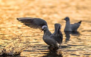 Фотография Чайки Птица Вода Крылья Вдвоем ANGRY BIRD seagull Животные