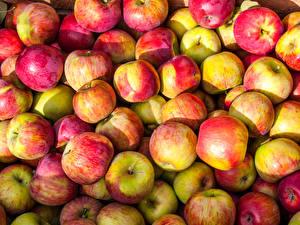 Обои Яблоки Фрукты Много Вблизи Еда